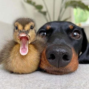 14 adorable snaps capture unlikely animal friendships